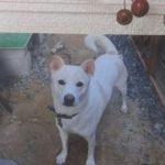 池田晶子さん著『犬の力を知っていますか?』を読んで、愛犬を想う